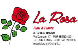 Piante e Fiori La Rosa